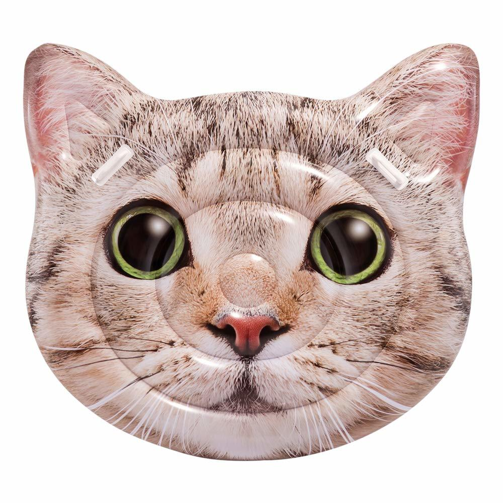 cat 54.jpg